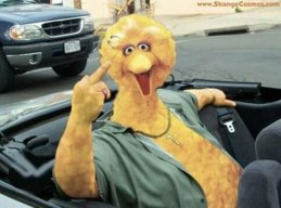 Big_Birdy