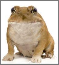 MC_Doggy_Frog18