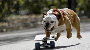bulldogs54
