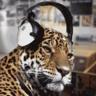 Dudley Leopard