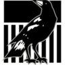magpies36