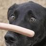 swingdog